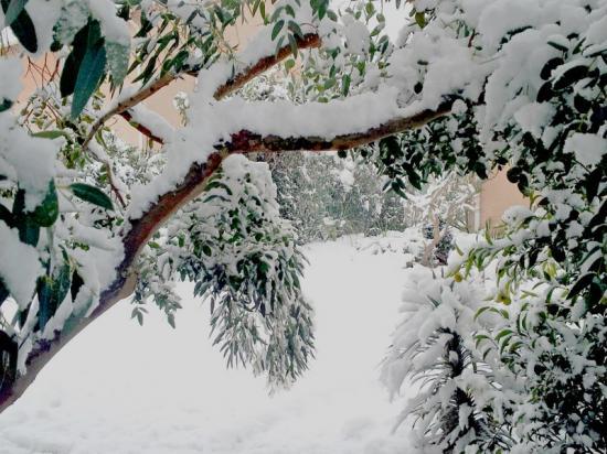 Exotica Tolosa - février 2015 - Chutes de neige.