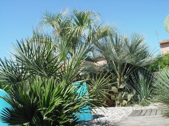 Ensemble de palmiers