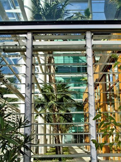 Divers palmiers au centre d'affaires Compans Caffarelli