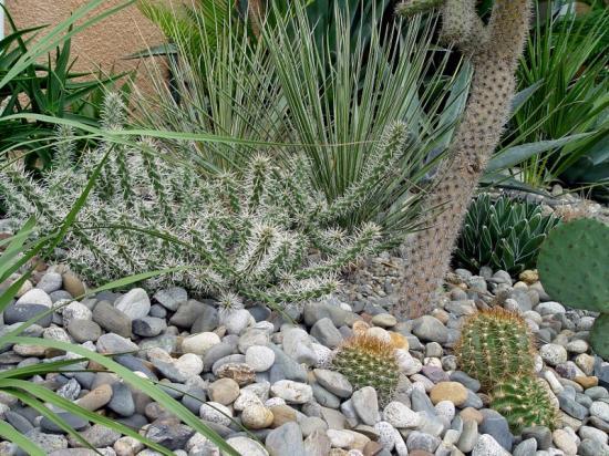 Exotica tolosa -  Minéral & succulentes - oct 2013