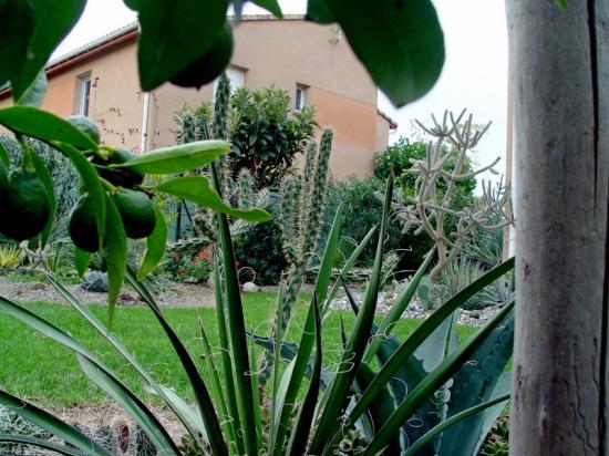 Exotica tolosa - Vue du jardin arrière - oct 2013