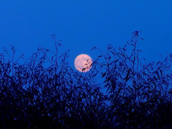 Moonrise @Exotica Tolosa - juillet 2013