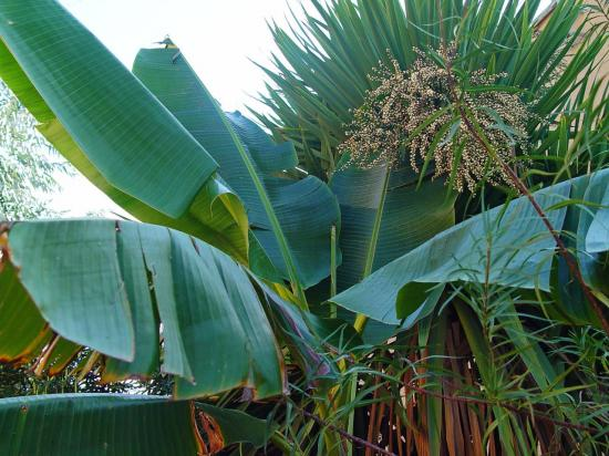 La zone de plantes humifères