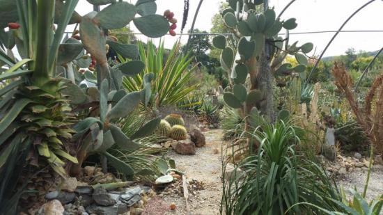 Cactuseraie Montolieu serre