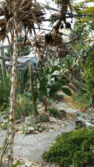 Cactuseraie Montolieu serre 2