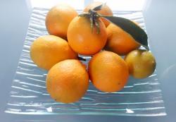 Citrangequat thomasville dec 2014