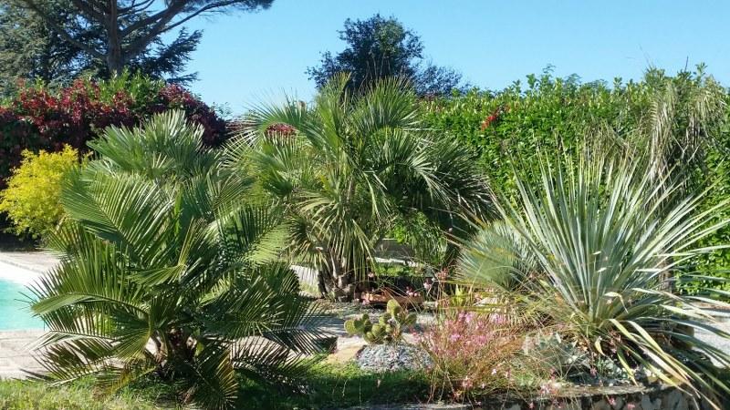Jardin aloha vue palmiers