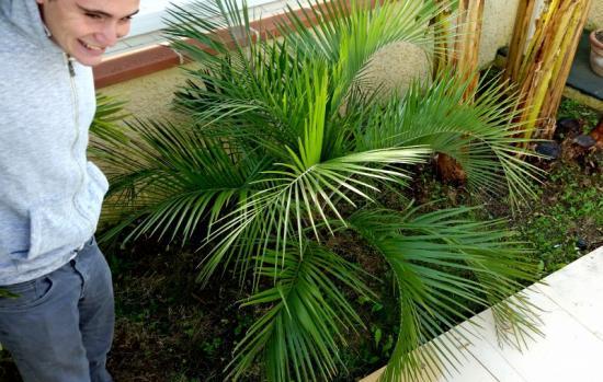 Jardin de tib 31 butia eriospatha