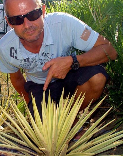 yucca-moreauii-tolosa-3.jpg