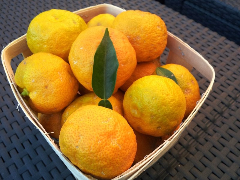 Yuzu fruits